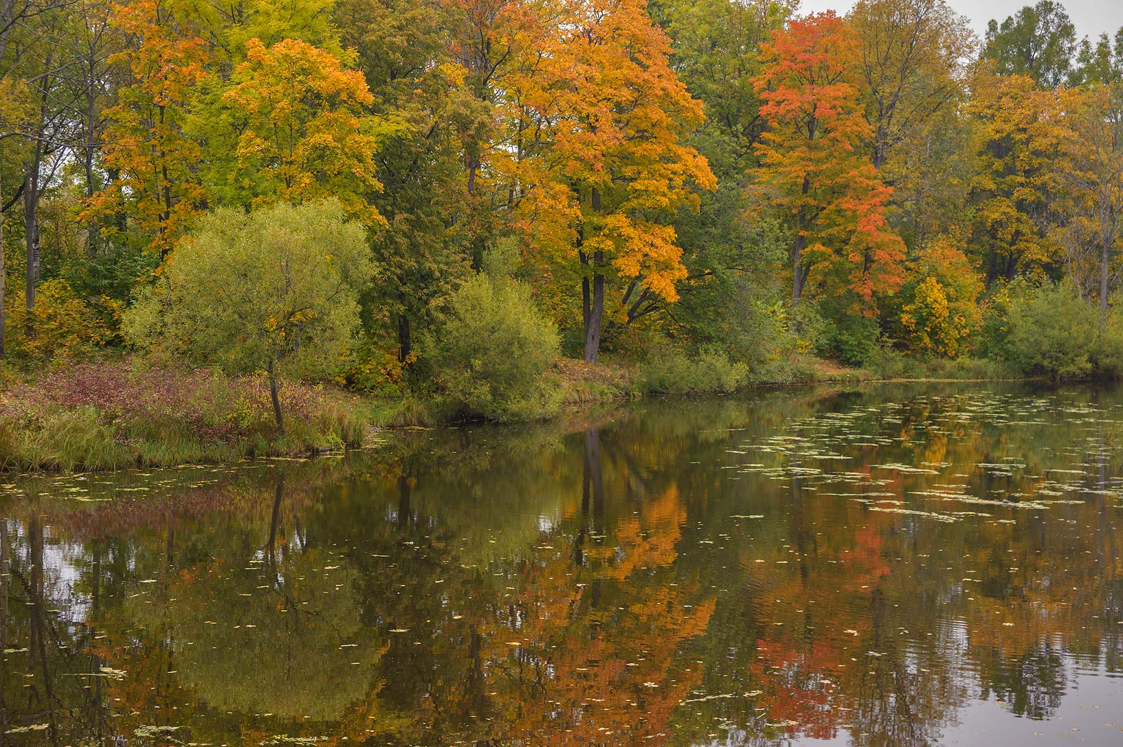 Fall colors of Lamsky Pond in Aleksandrovsky...Selo) near St.Petersburg, Russia