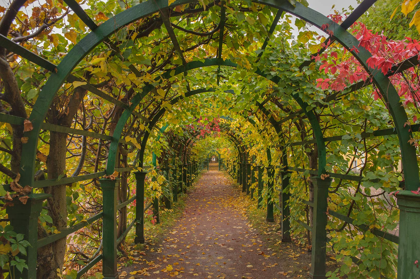 Arbor of Upper Gardens near Pravlenskaya St.. Peterhof, a suburb of St.Petersburg. Russia