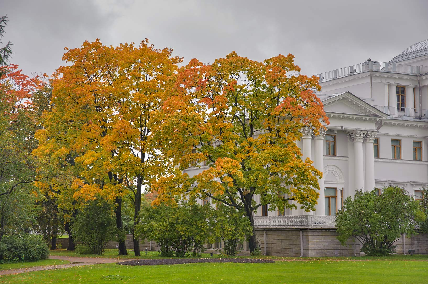 Maples left from Elagin Palace on Elagin Island. St.Petersburg, Russia