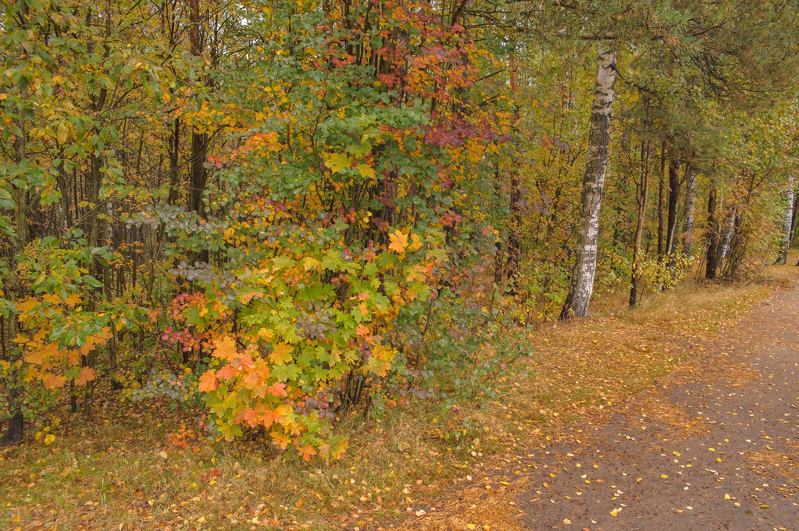 Fall colors near shooting range in Sosnovka Park. St.Petersburg, Russia