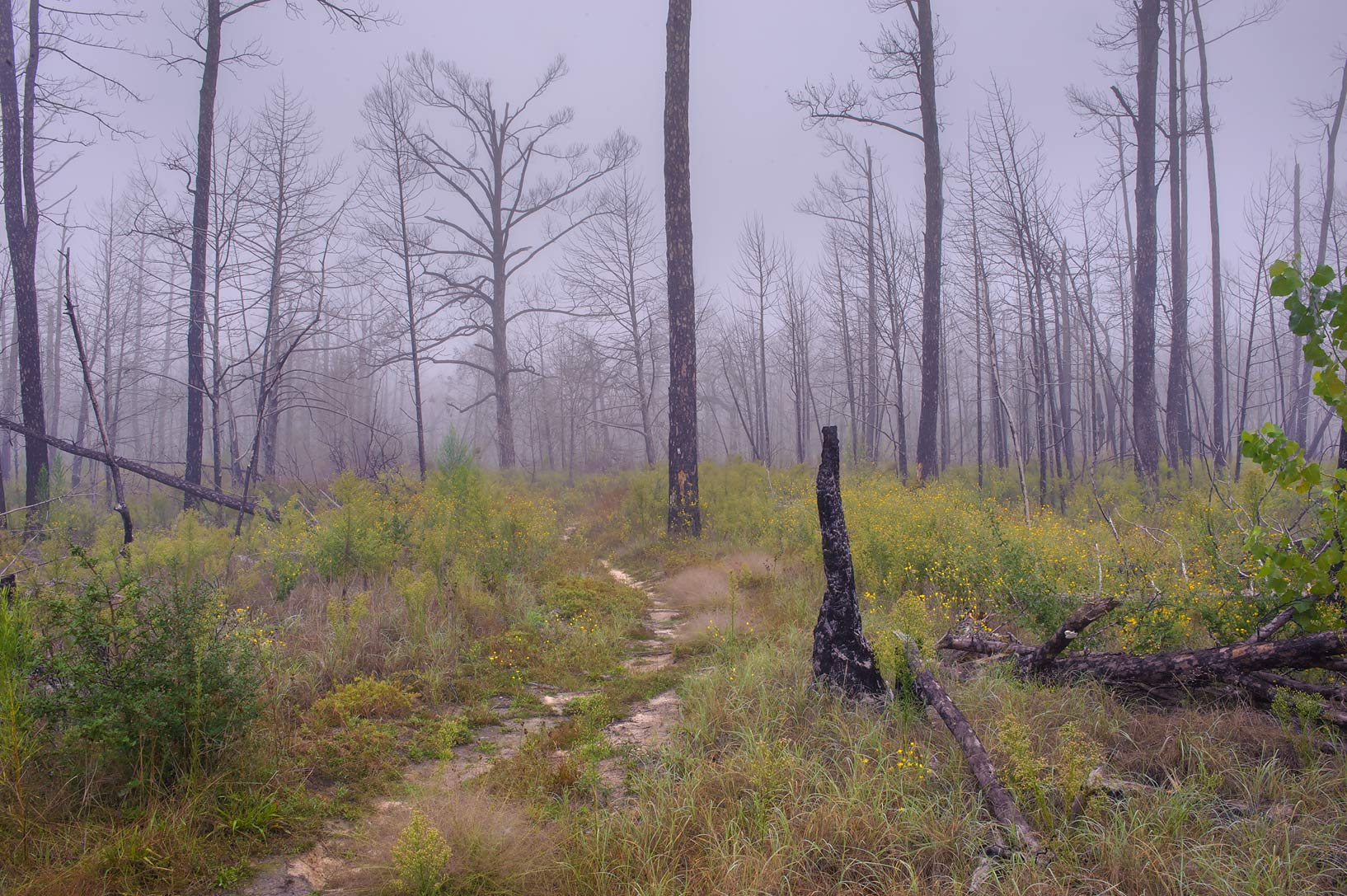 Area of south end of Roosevelt Cutoff Trail in Bastrop State Park. Bastrop, Texas
