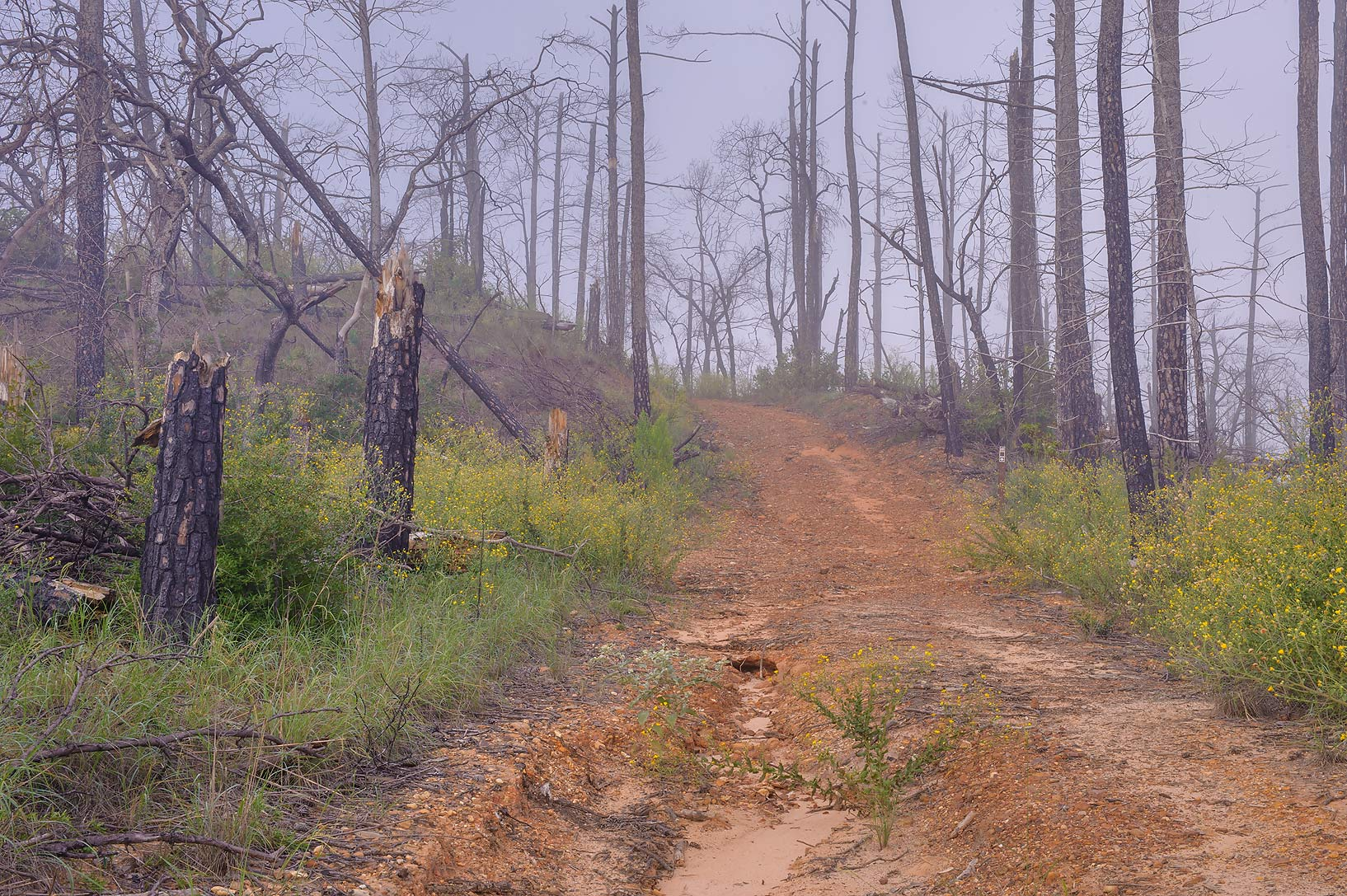 Forest road in mist in Bastrop State Park. Bastrop, Texas