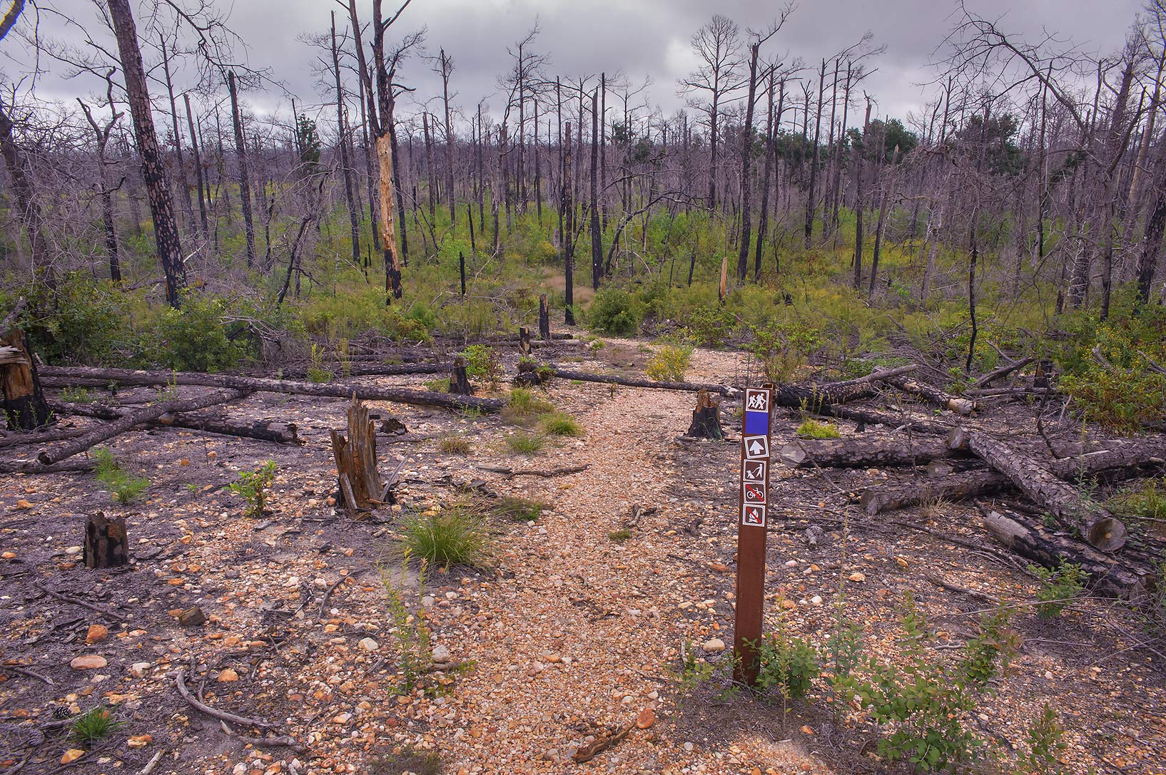 Barren area of Lost Pines Trail in Bastrop State Park. Bastrop, Texas