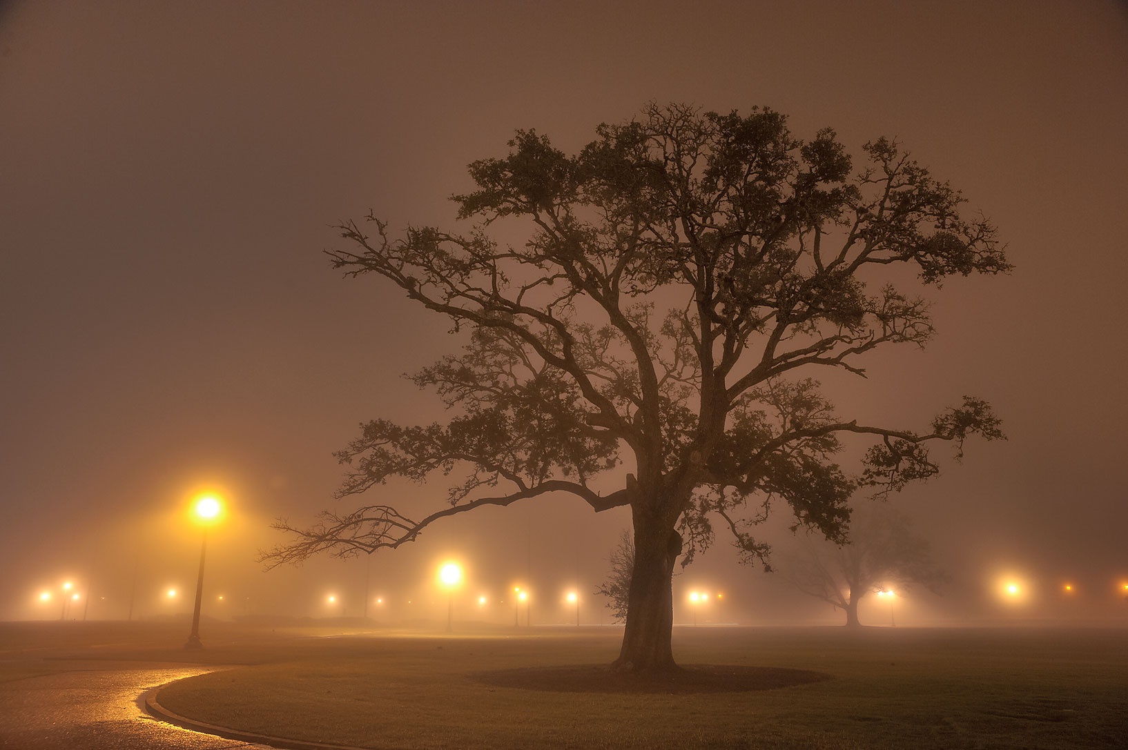 Oak in fog in front of Administration Building on...M University. College Station, Texas