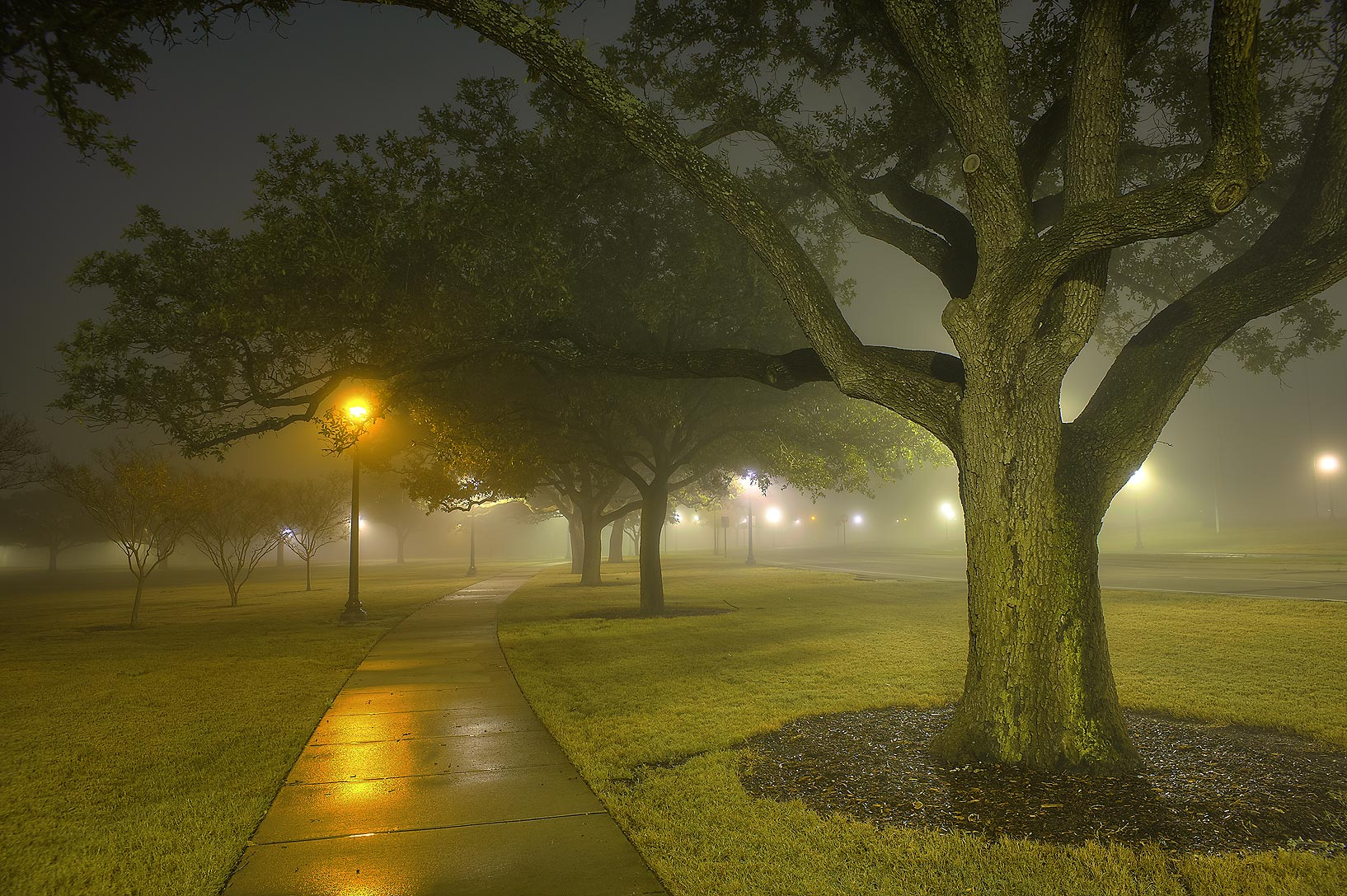 Oak alley of New Main Dr. on campus of Texas A&M University. College Station, Texas