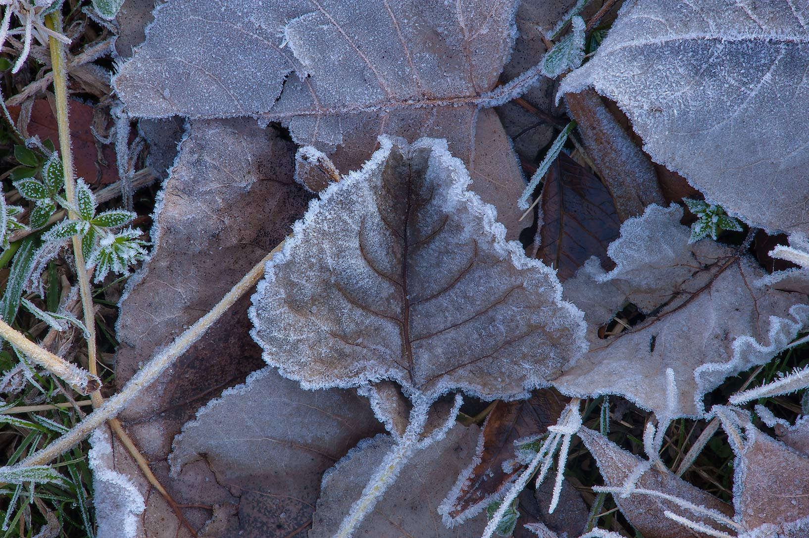 Morning freeze on dry fall leaves of Park Hudson Trail. Bryan, Texas