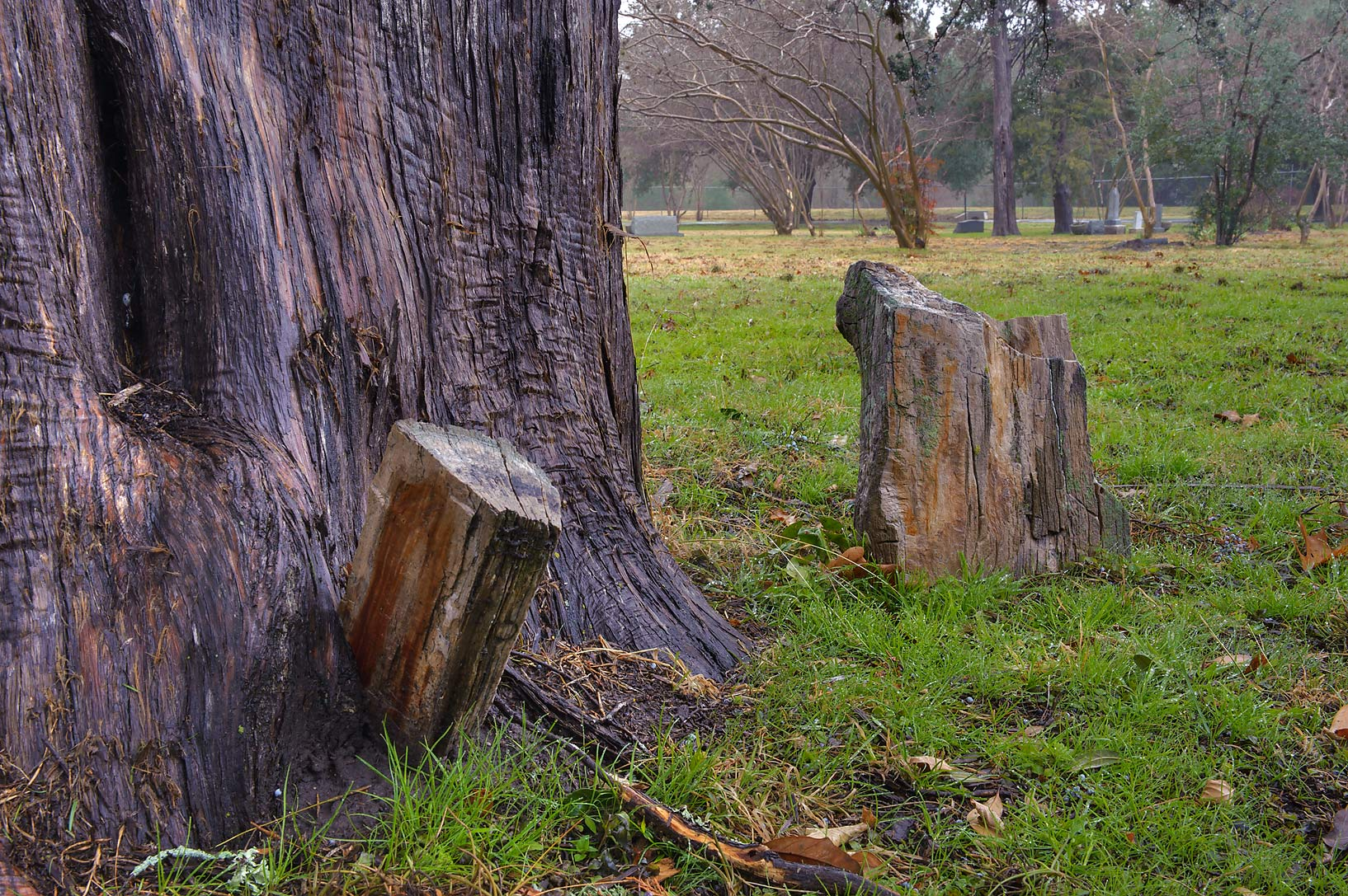 Petrified wood tombstones in College Station Cemetery. College Station, Texas