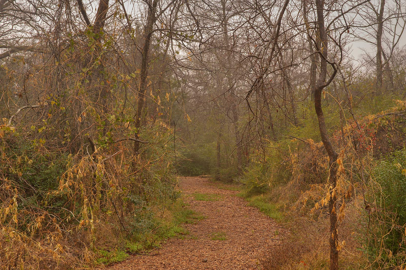 Trail in Bee Creek Park at rain. College Station, Texas