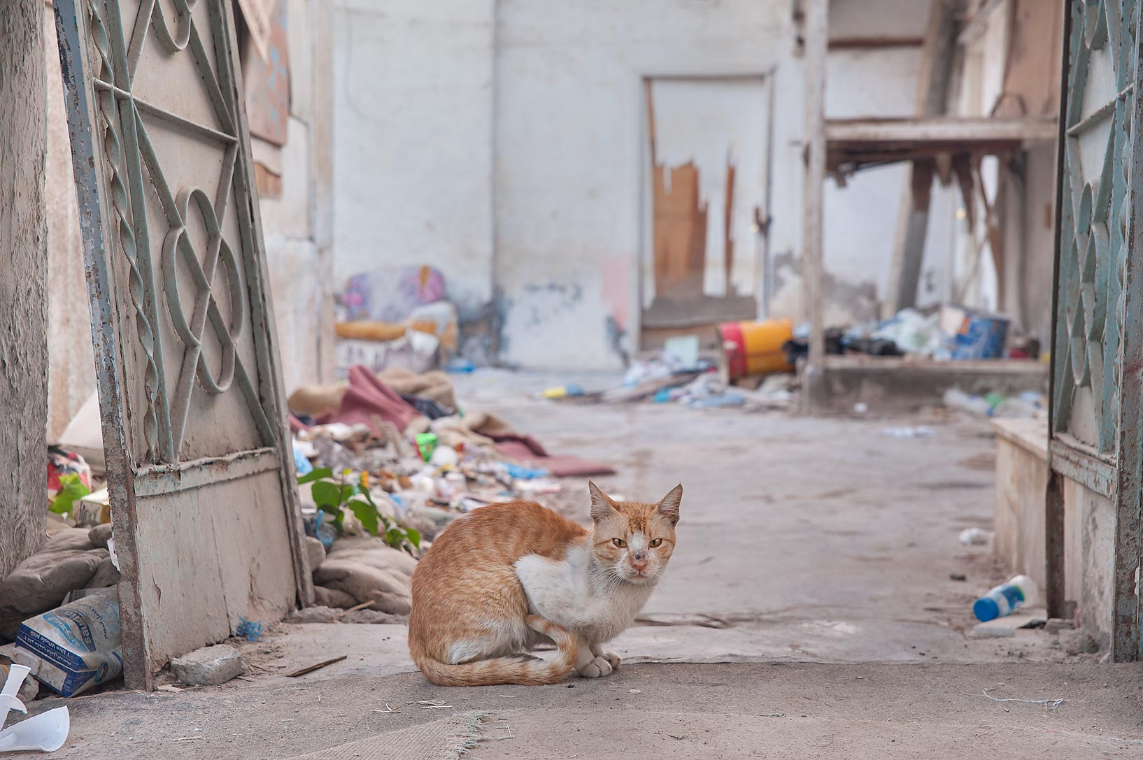 Street cat sitting in doorway in Musheirib area. Doha, Qatar
