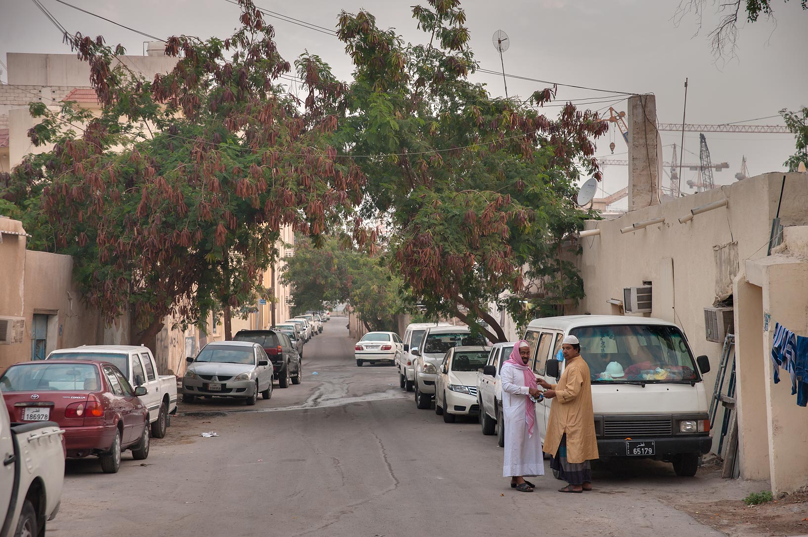 White leadtree (jumbay, Leucaena leucocephala) on a street in Musheirib area. Doha, Qatar