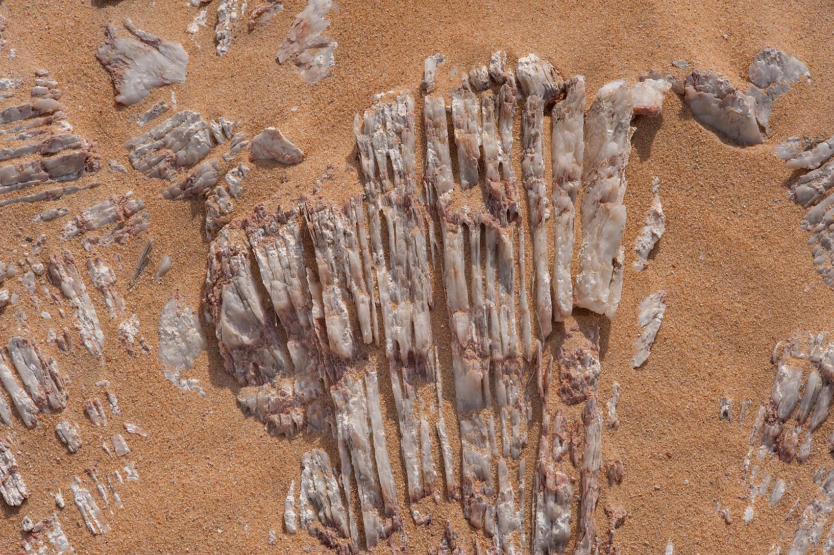 Patterns of gypsum crystals (selenite) in area of Jebel Al-Nakhsh in south-western Qatar