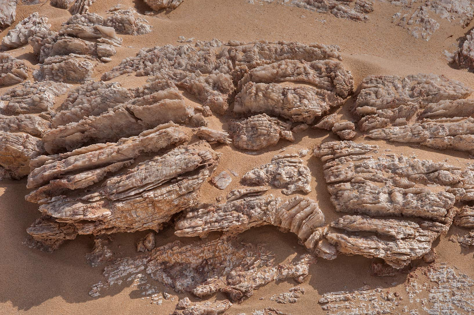 Protruding layers of gypsum crystals (selenite...Jebel Al-Nakhsh in south-western Qatar