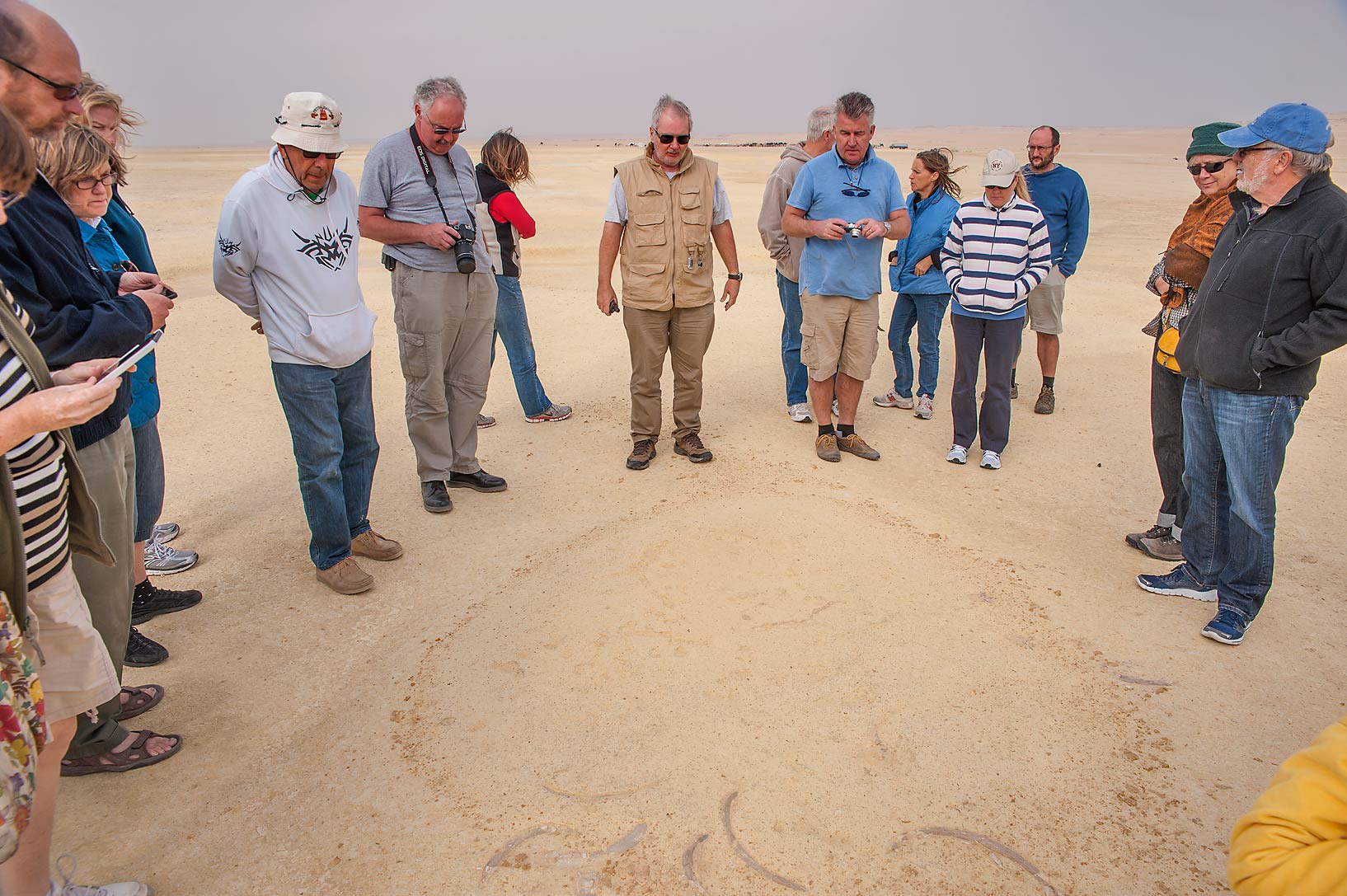 Members of the Qatar Natural History Group (QNHG...coastal sabkha in south-western Qatar