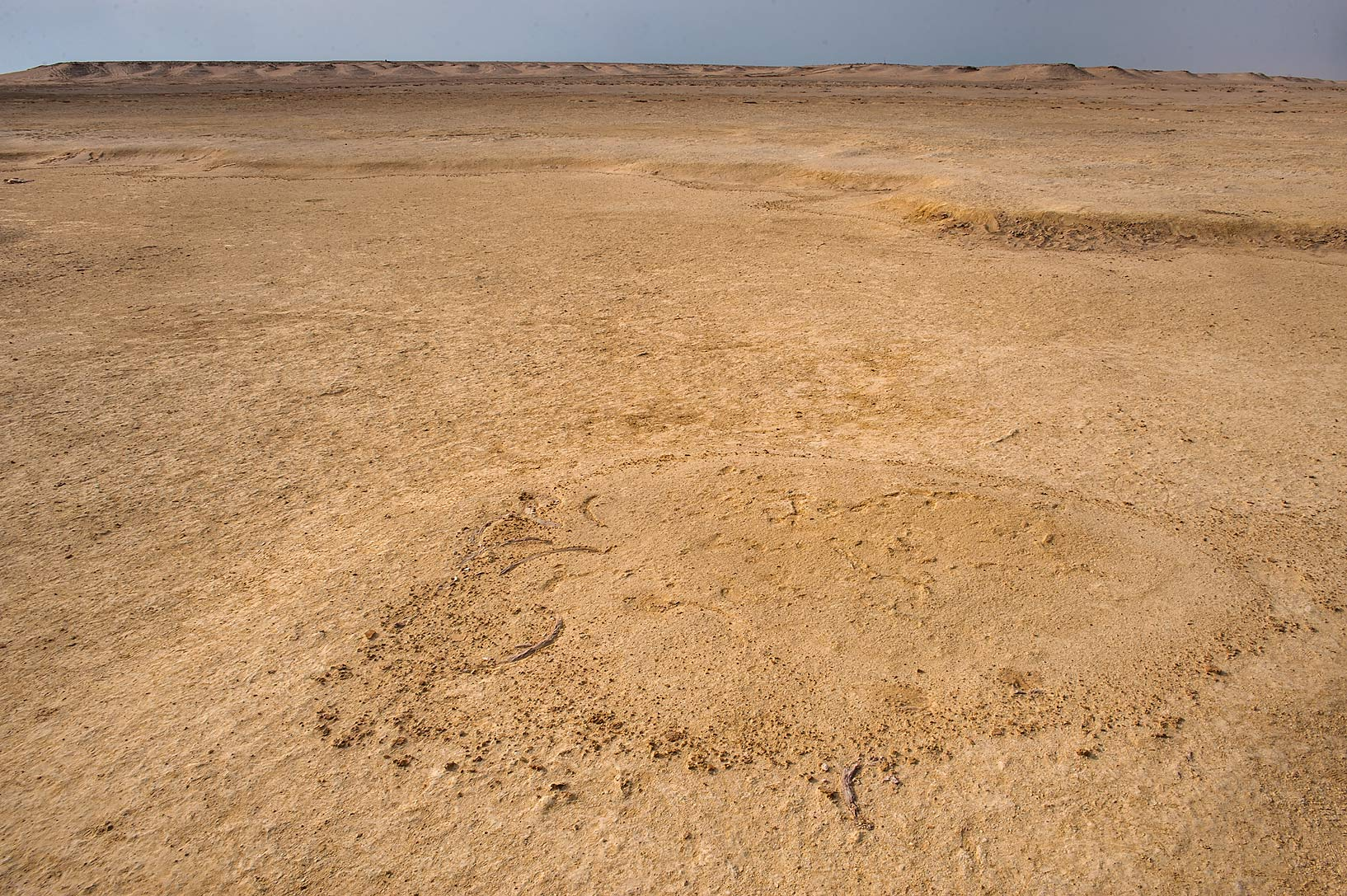 Small mound with fossilized dugong bones in area of coastal sabkha in south-western Qatar