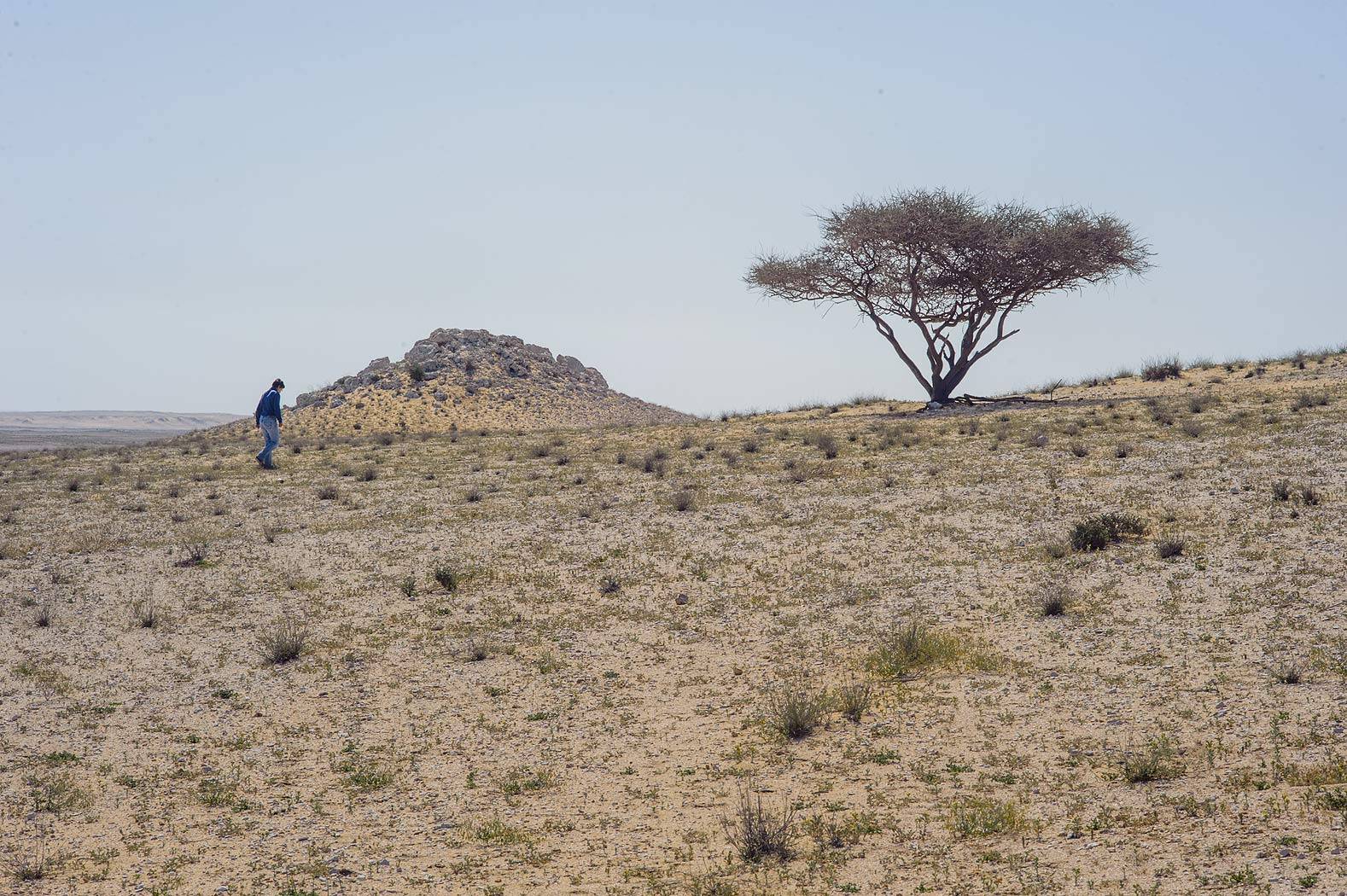 Rocky desert with acacia tree near Umm Bab in south-western Qatar