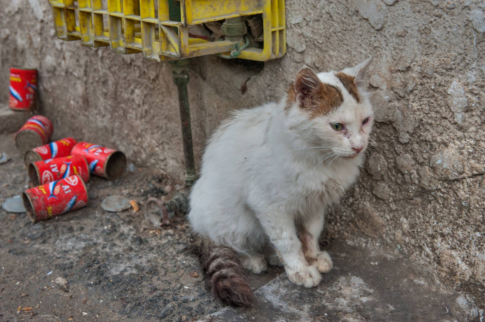 Cat after eating canned fish on Umm Wishad St., in Musheirib area. Doha, Qatar