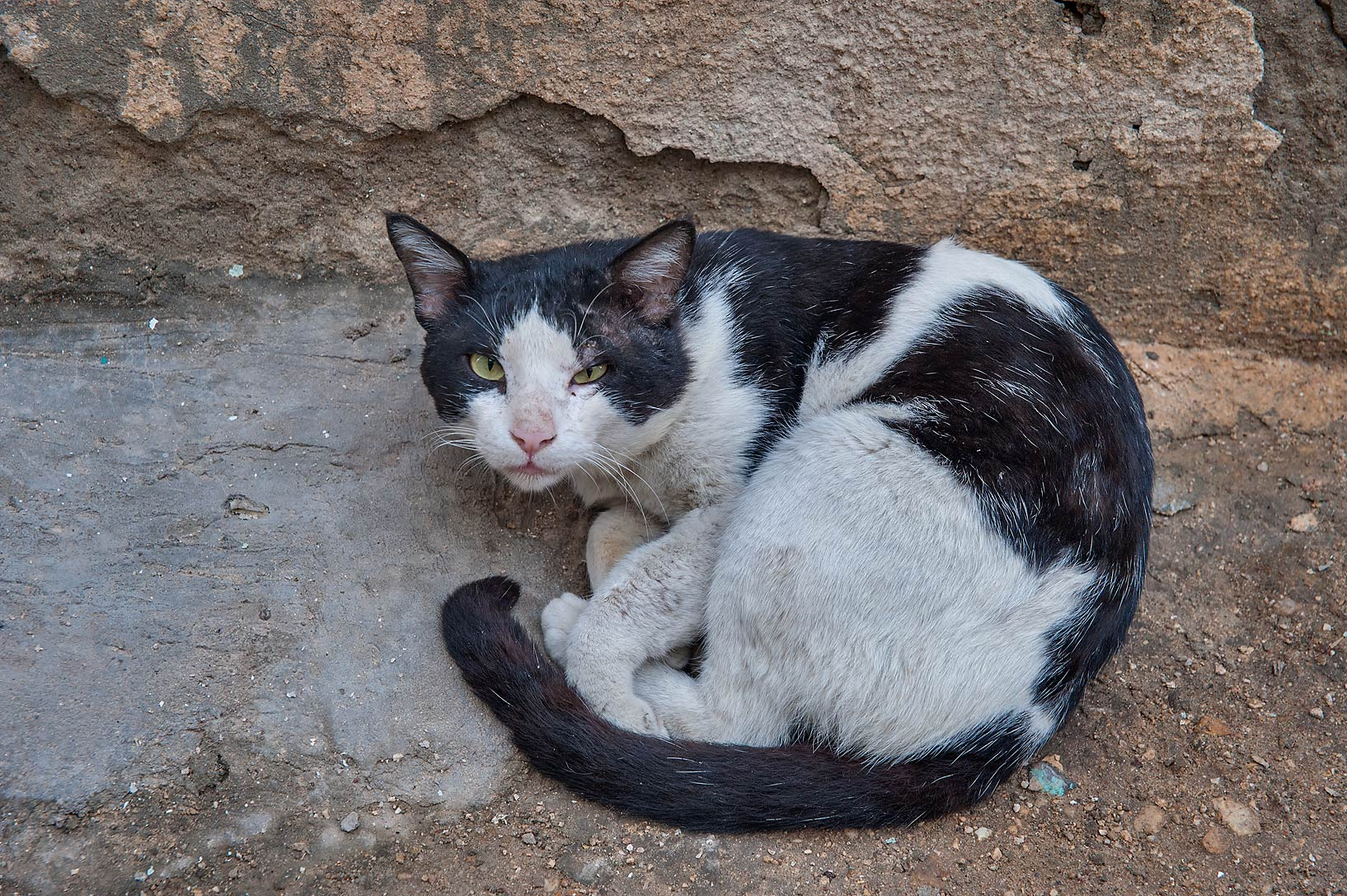 Black and white cat near Abdullah Bin Thani St. in Musheirib area. Doha, Qatar