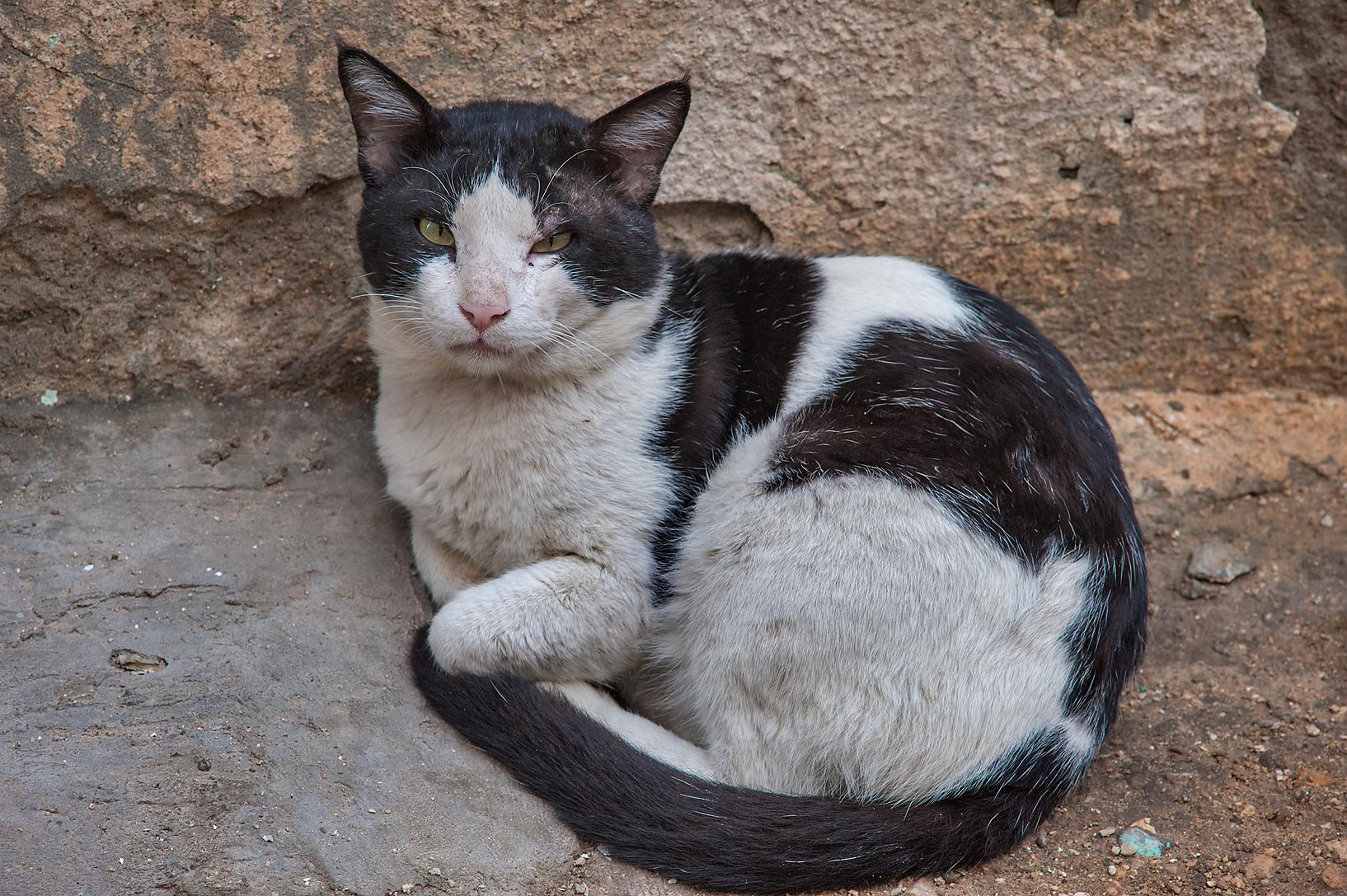 Resting black and white cat near Abdullah Bin Thani St. in Musheirib area. Doha, Qatar