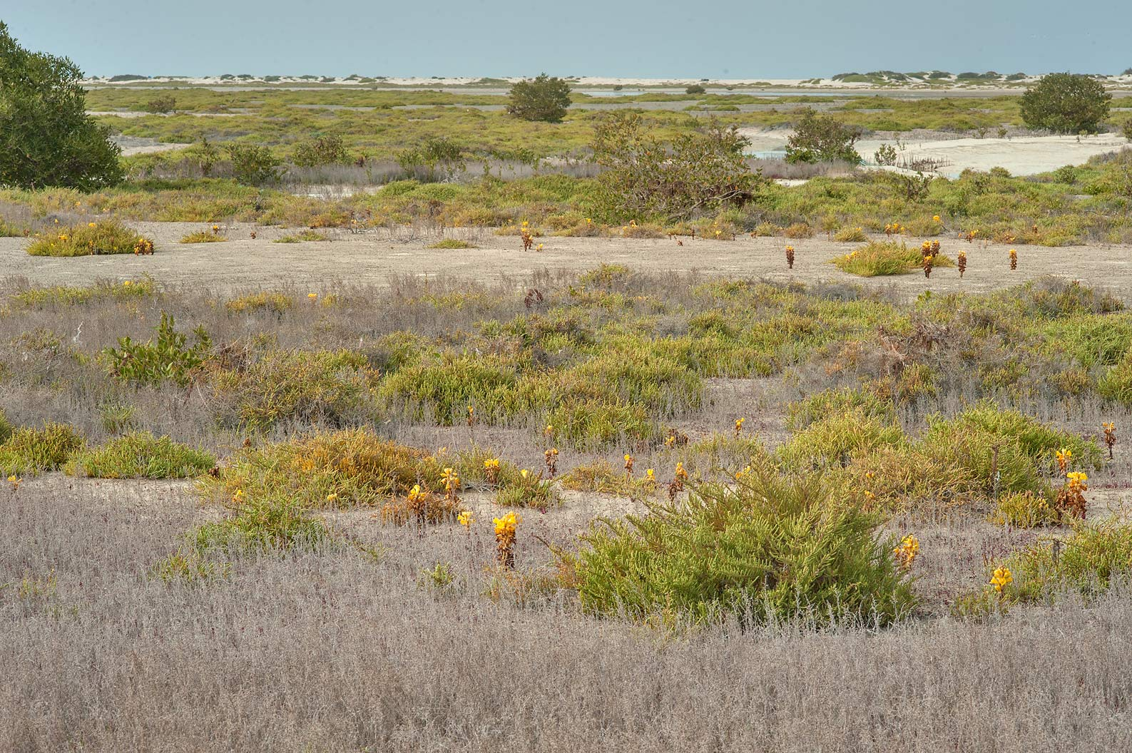 Salt marshes near Umm Tays Island in Madinat Al Shamal area. Qatar