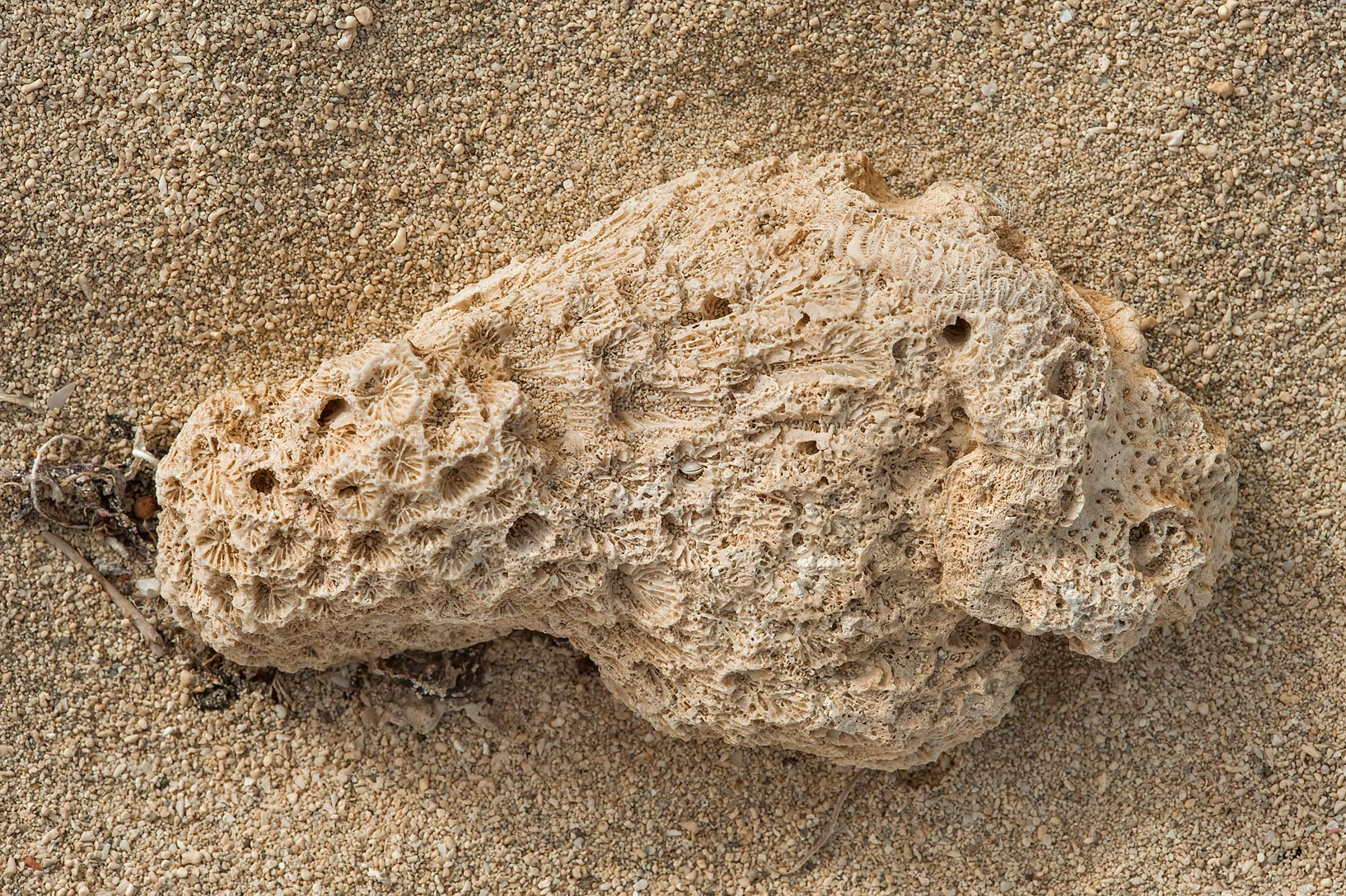 Dead coral on a beach of Umm Tays Island in Madinat Al Shamal area. Qatar