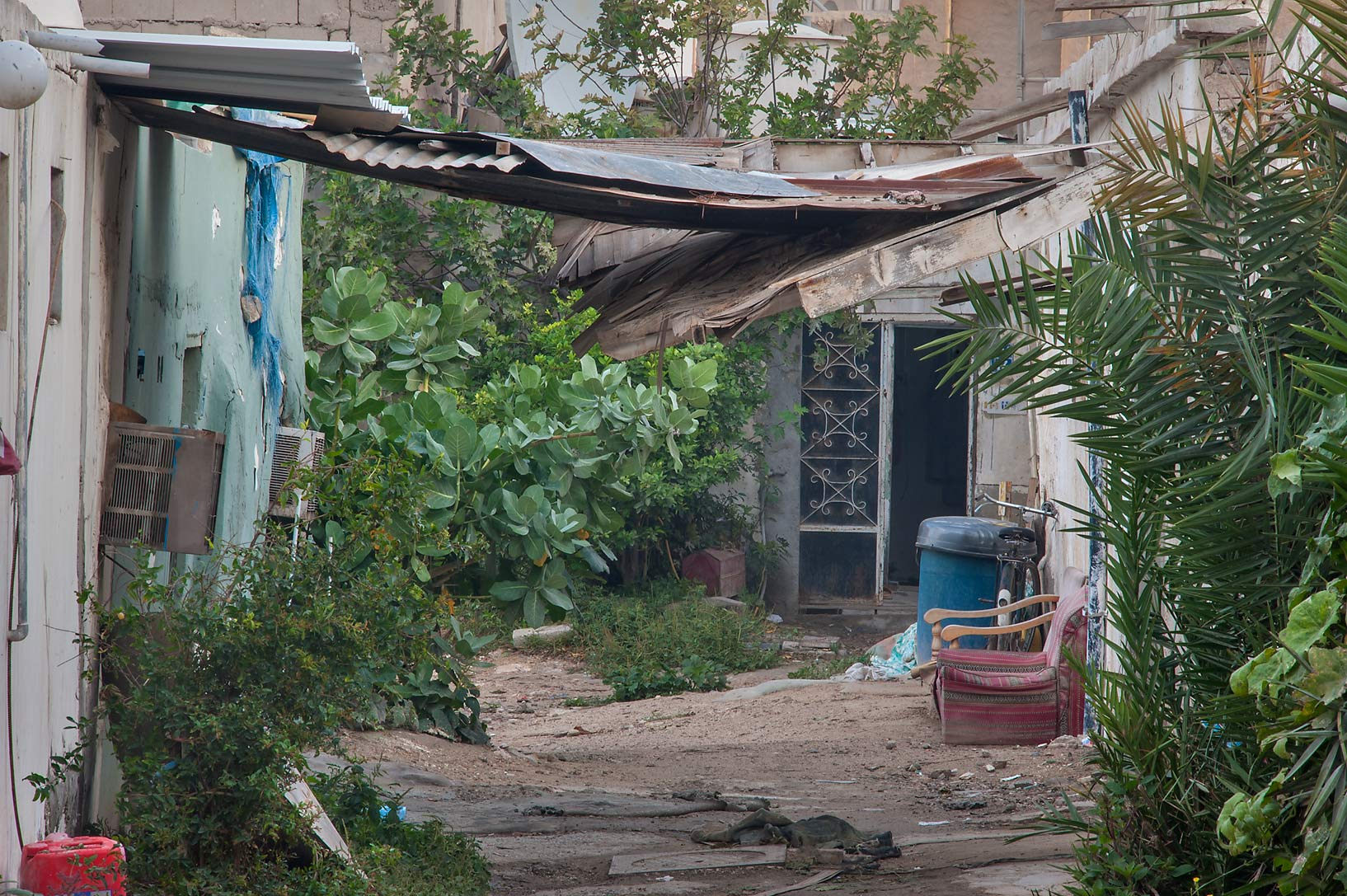 Dense vegetation in alleyway (sikka) near Umm Wishad St. in Musheirib area. Doha, Qatar