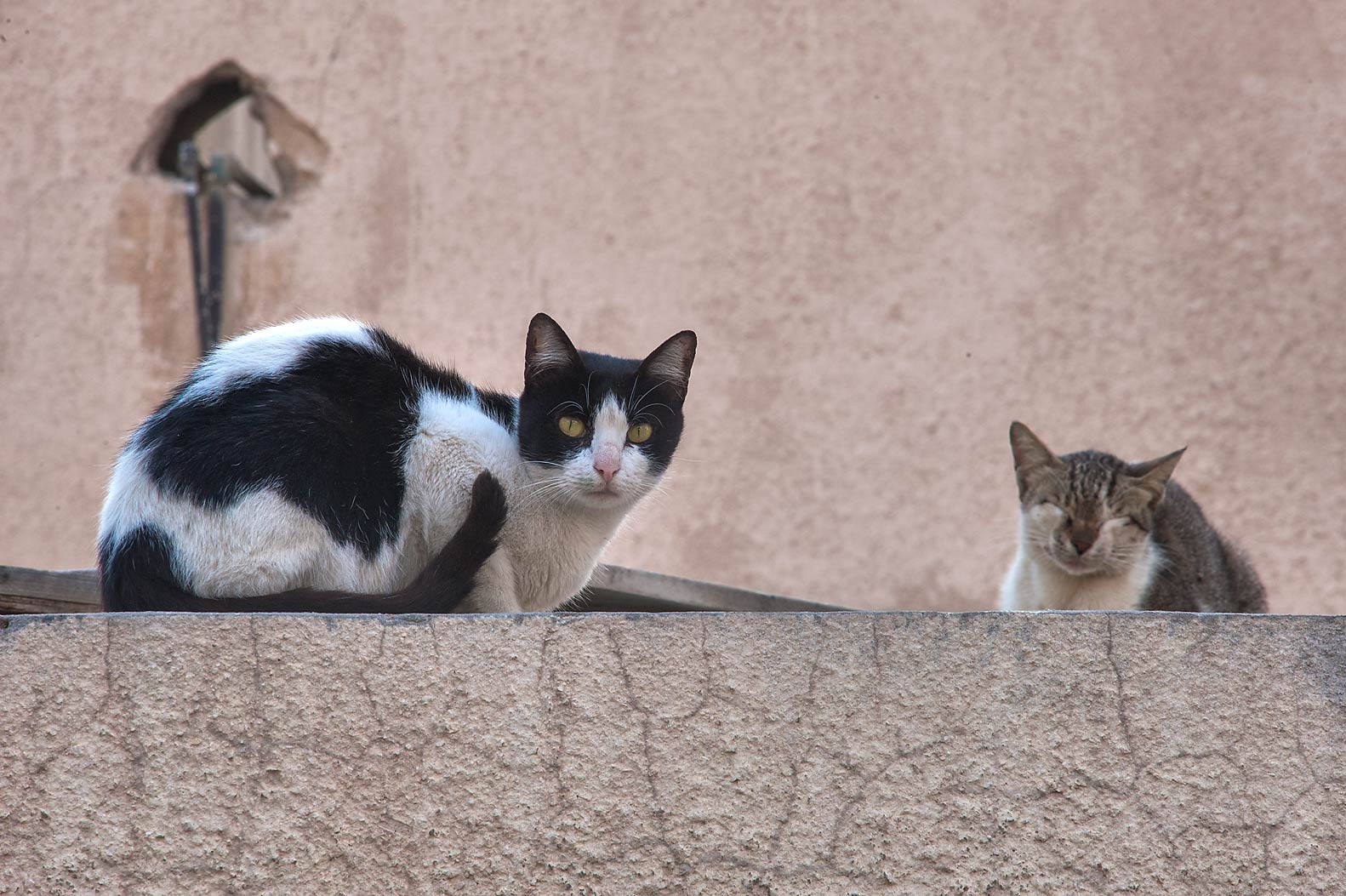 Pair of cats resting on a stone wall on Umm Wishad St. in Musheirib area. Doha, Qatar
