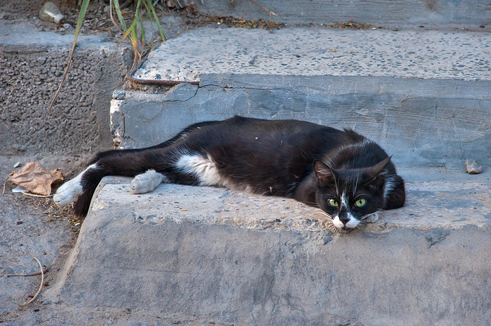 Tuxedo cat sleeping on steps near Umm Wishad St. in Musheirib area. Doha, Qatar