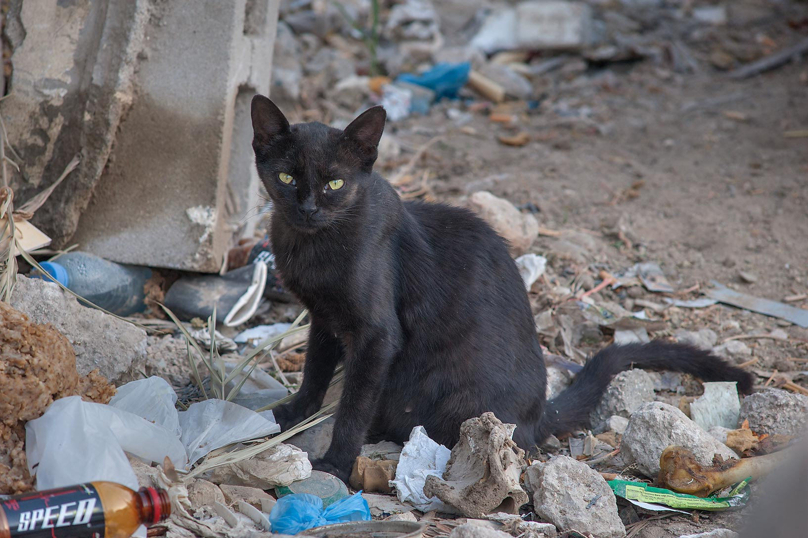 Black cat on Umm Wishad St. in Musheirib area. Doha, Qatar