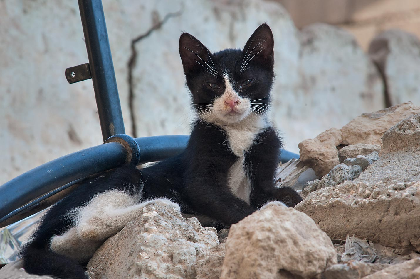 Black and white kitten sittingon ruins near Al Najada St. in Musheirib area. Doha, Qatar