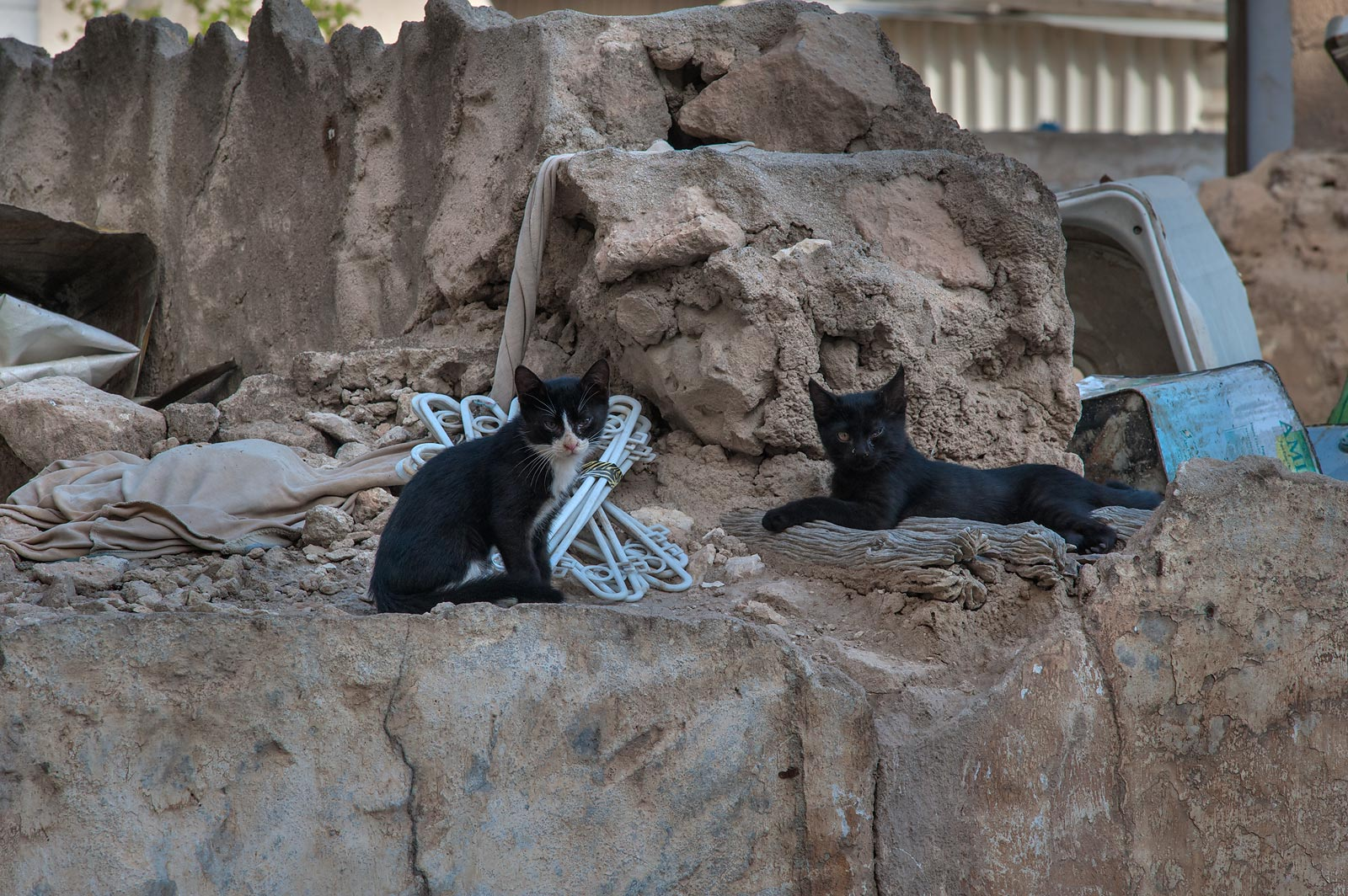 Family of black cats resting on ruins near Al Najada St. in Musheirib area. Doha, Qatar