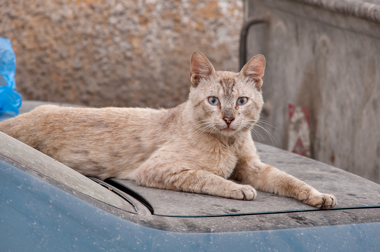 Dusty cat resting on a car near Umm Wishad St. in Musheirib area. Doha, Qatar
