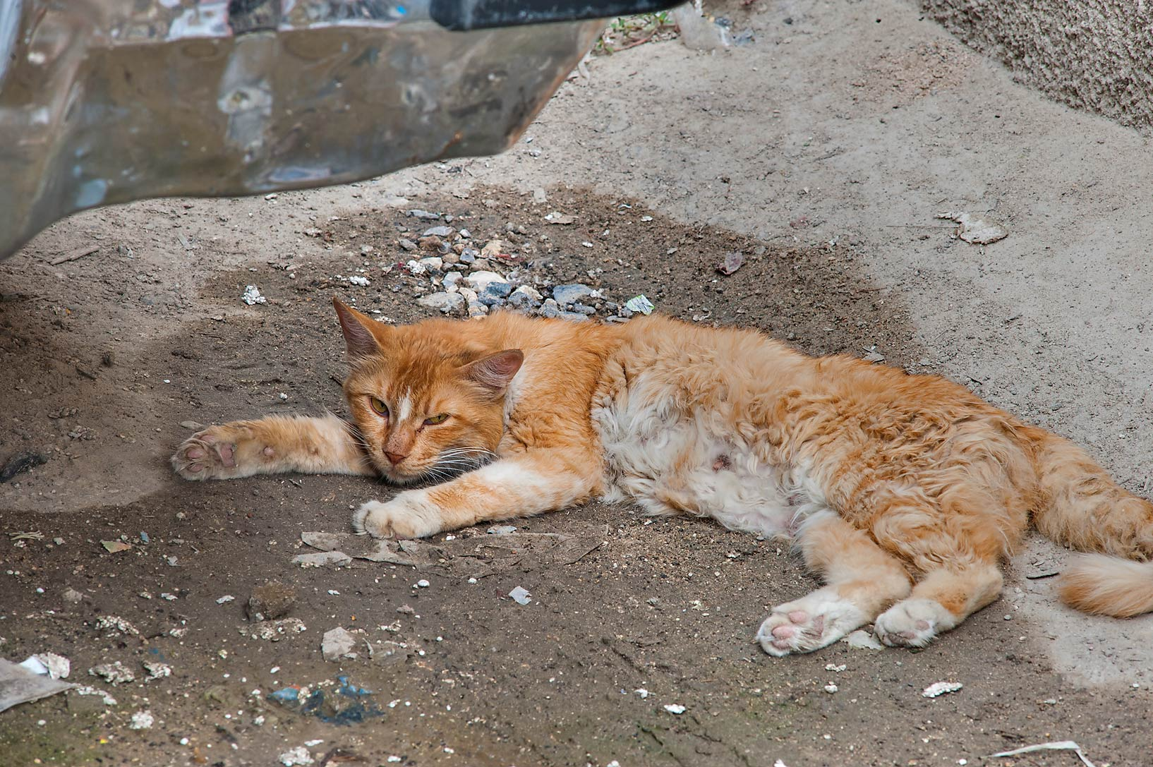 Brown cat sleeping under a leaking air...St. in Musheirib area. Doha, Qatar
