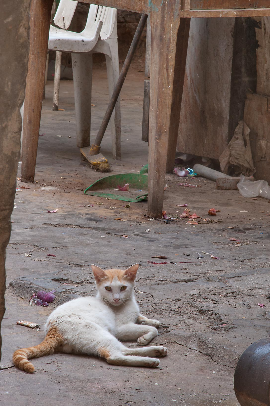 A cat resting in worker's apartment on Al Najada St. in Musheirib area. Doha, Qatar