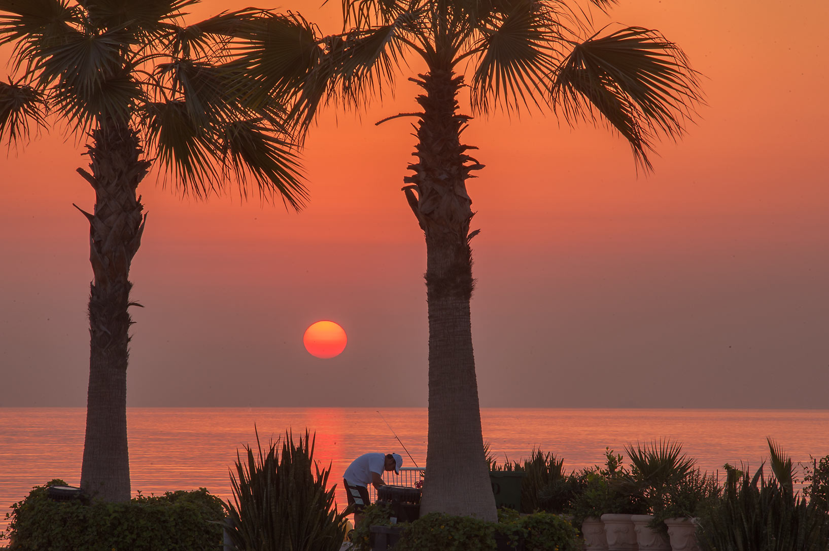 Sunrise through palms of Corniche Promenade. Doha, Qatar