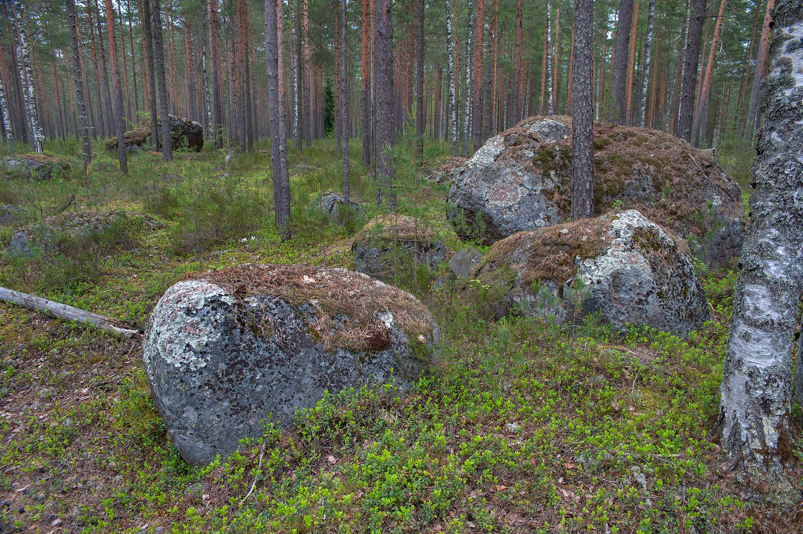 Granite rocks in a forest east from Leypyasuo. North from St.Petersburg, Russia