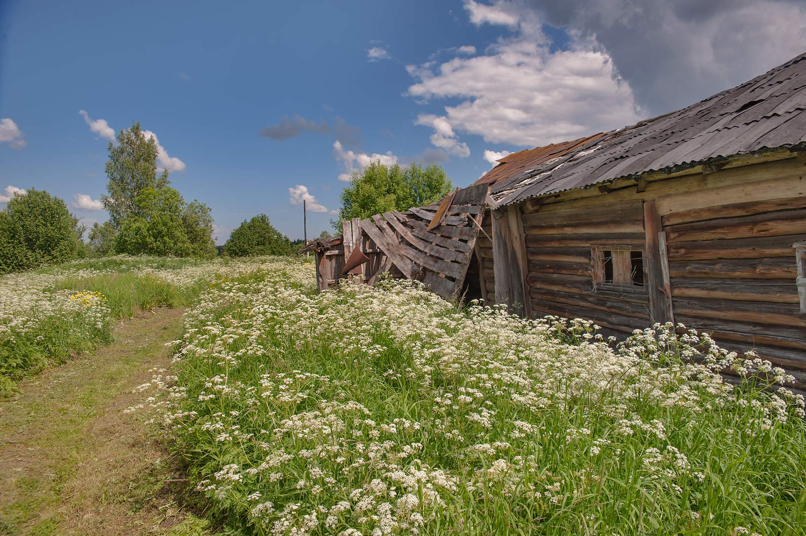 Old barn near Olkhovets village, 50 miles south from St.Petersburg. Russia