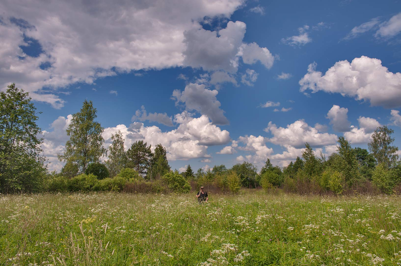 Meadow near Olkhovets village, 50 miles south from St.Petersburg. Russia
