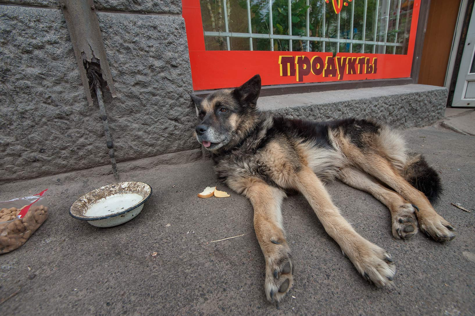 Stray dog resting at 16 Leningradskoe Shosse. Vyborg, Russia