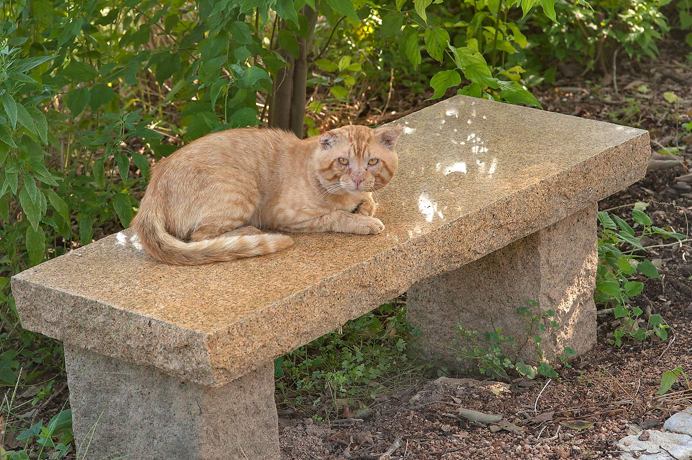 Brown cat in Antique Rose Emporium. Independence, Texas