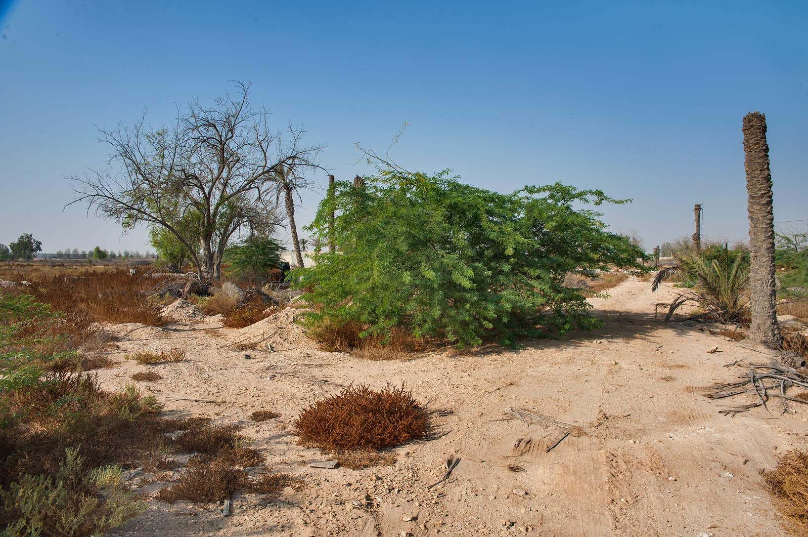 Remains of a garden in a village of Al Mashrab in area of Ras Laffan Farms. Northern Qatar