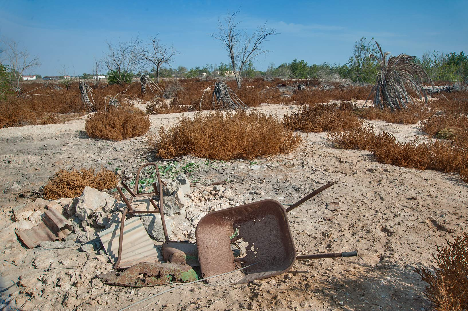 Abandoned gardens in area of Ras Laffan Farms. Northern Qatar