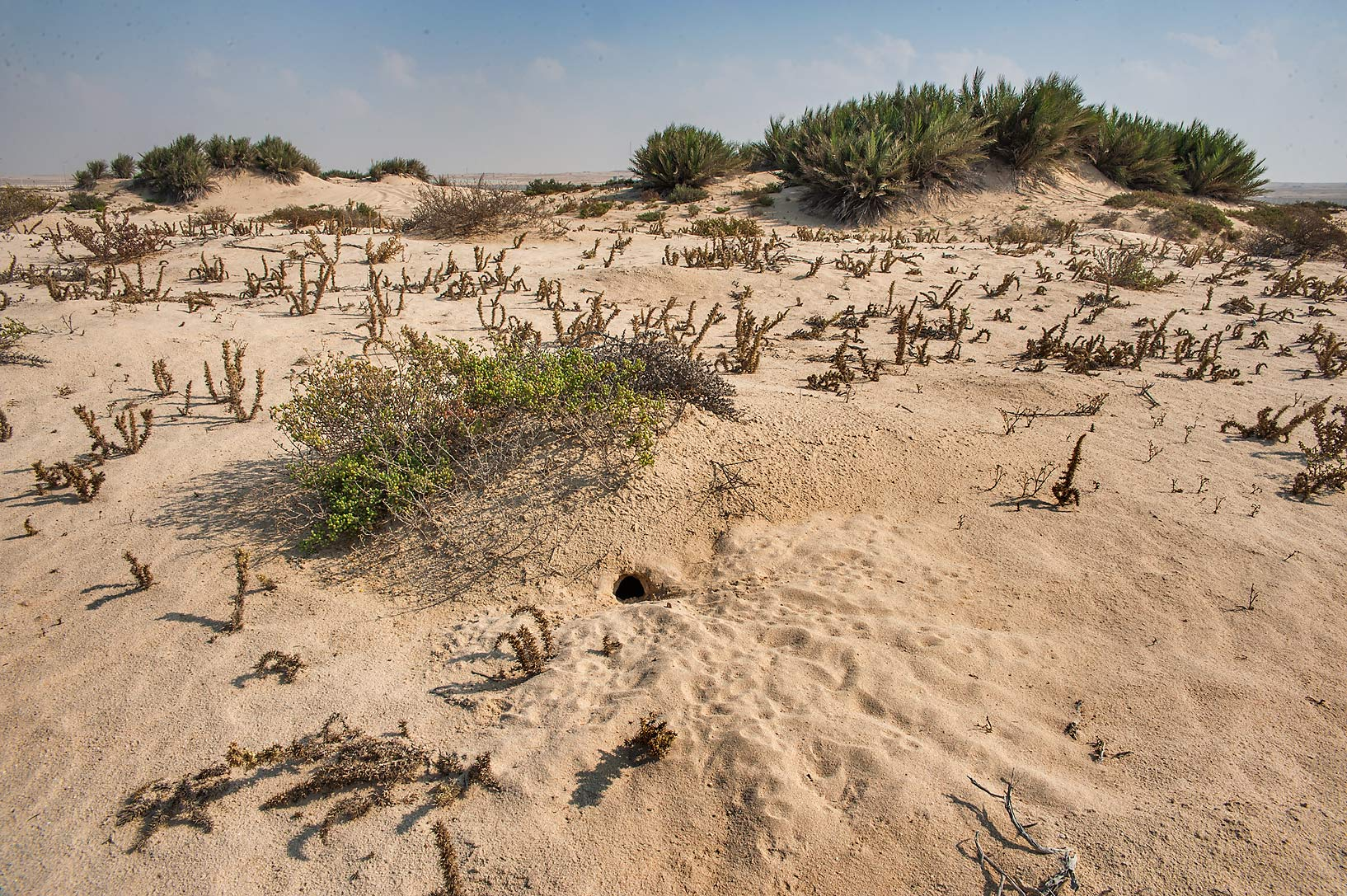 Animal burrows in sand on a beach in the area of...near Umm Bab in south-western Qatar