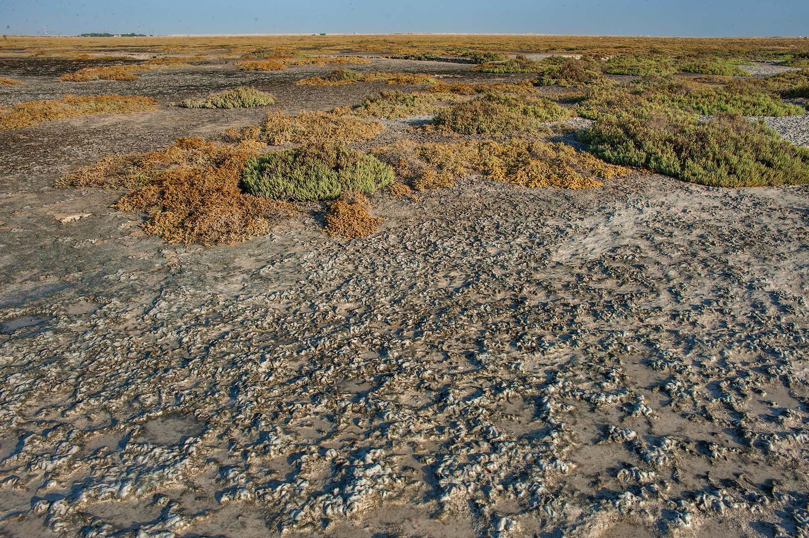 Salt marsh with cyanobacterial mats near Al Thakira. Qatar