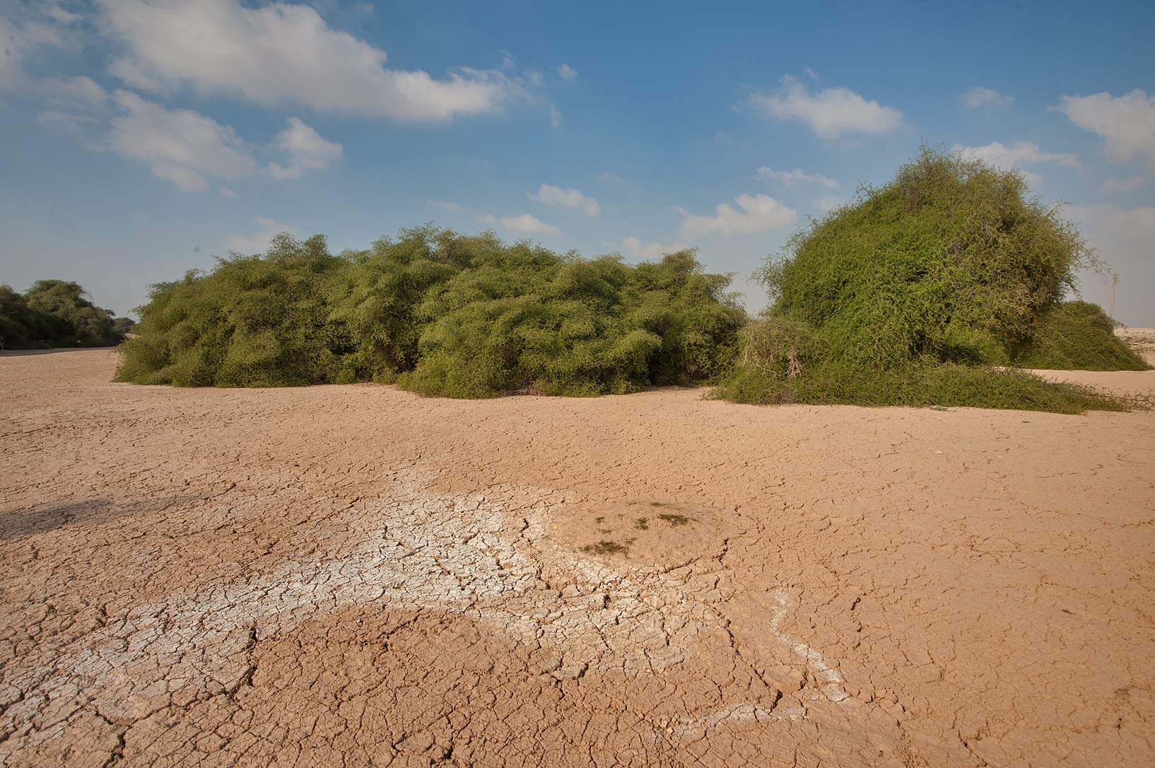 Silty depression, with bushes of Ziziphus...Nuaman (Numan) in north-western Qatar