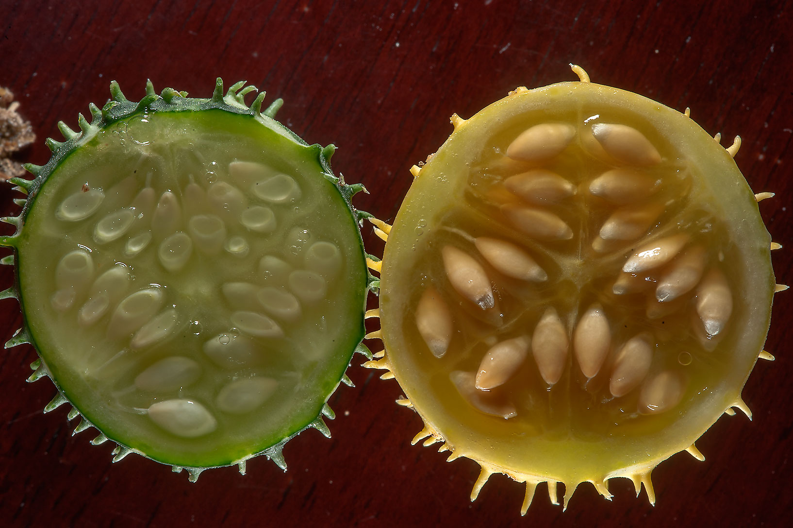 Dissected fruit of wild gourd (Cucumis...Al Numan) near Zubara. Northern Qatar