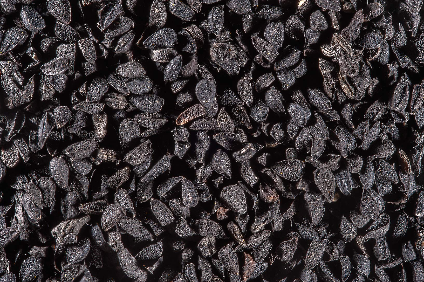 Nigella seeds (triangular, matte-black grains...Souq Waqif (Old Market). Doha, Qatar