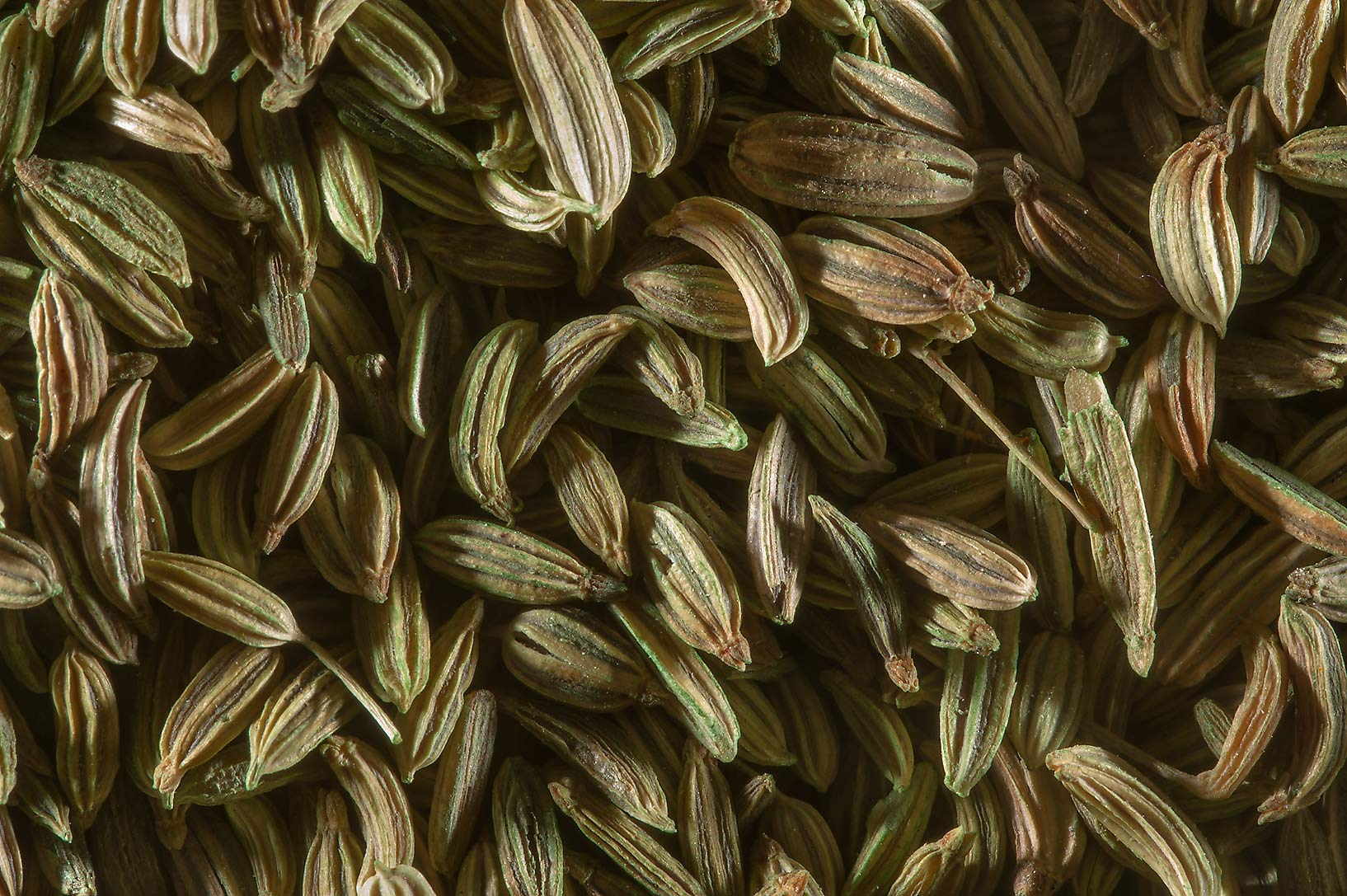 Fennel seeds from India (Foeniculum vulgare) for...Souq Waqif (Old Market). Doha, Qatar