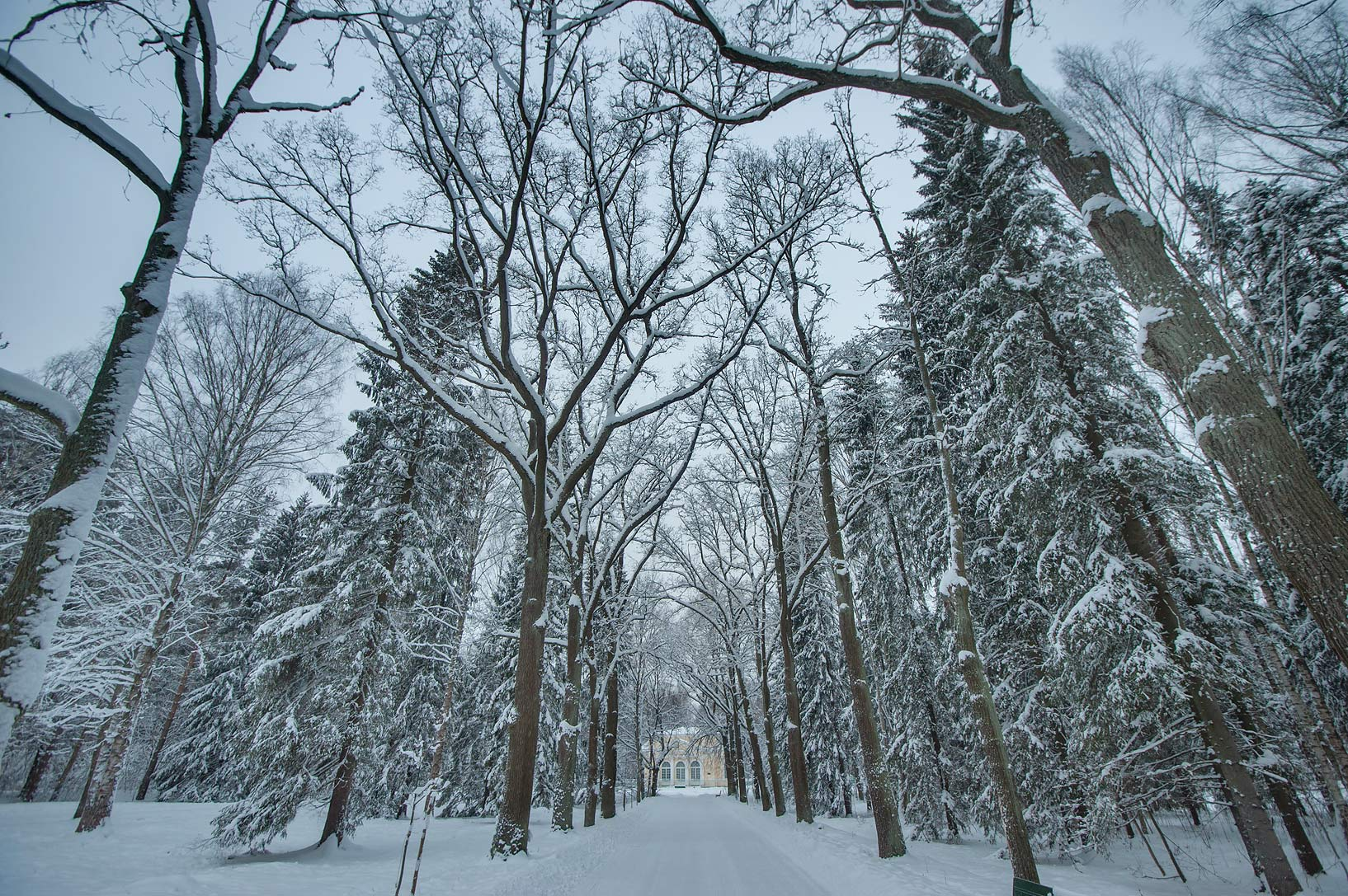 Snow at Green Woman Alley in Pavlovsk Park. Pavlovs, a suburb of St.Petersburg, Russia