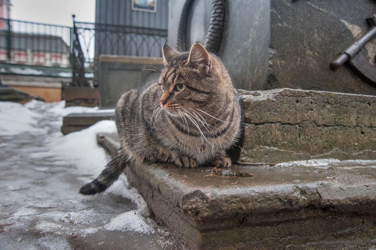 Tabby cat in Necropolis of Alexander Nevsky Lavra...Cemetery). St.Petersburg, Russia