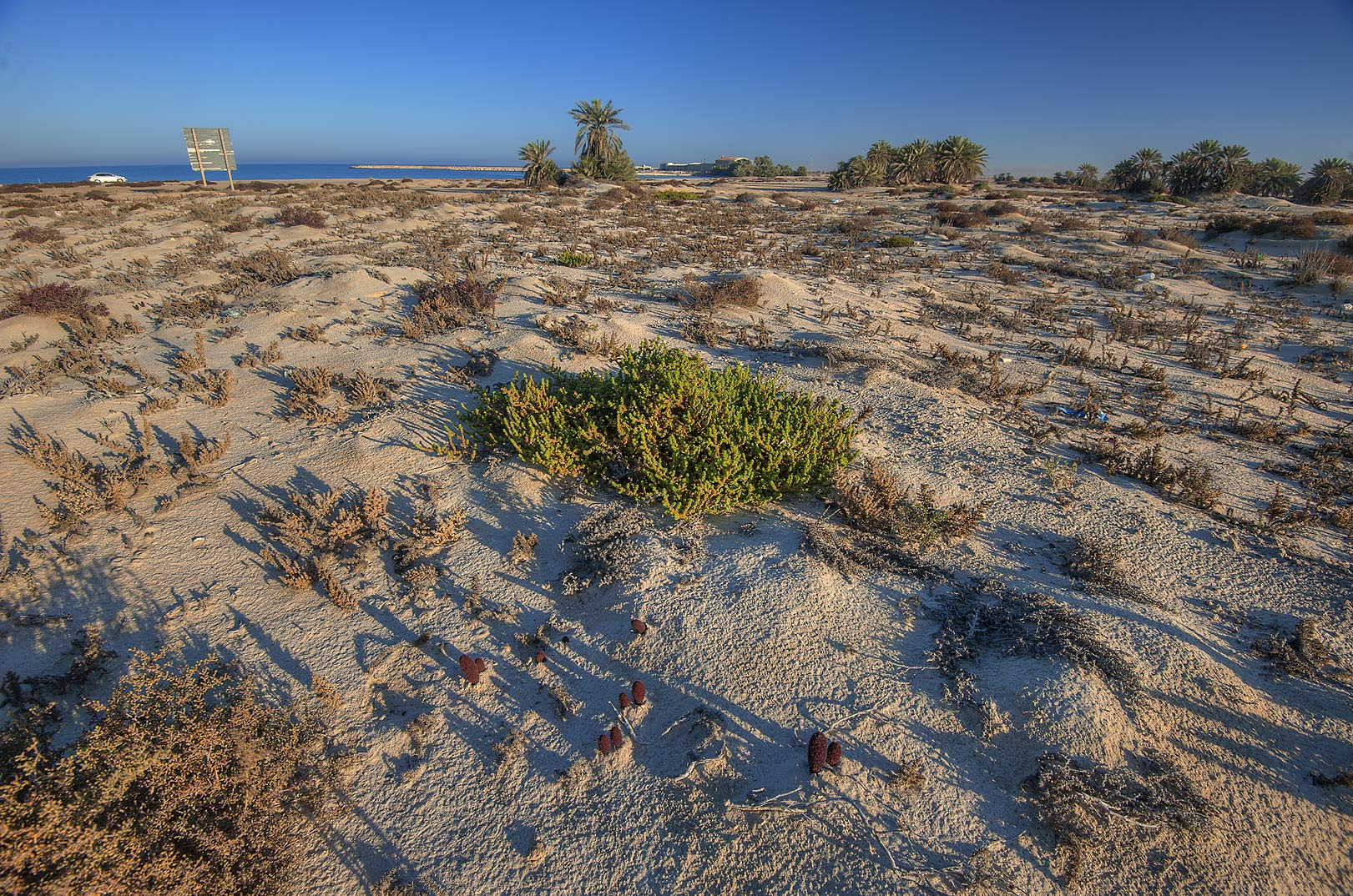 Habitat of Desert Thumb (Cynomorium coccineum...well near Umm Bab. South-western Qatar